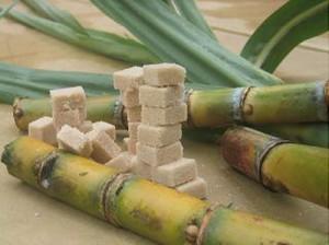 canne-a-sucre-morceau-300x224