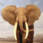 elefant-150x150
