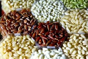 rice_grains_irri1-300x200